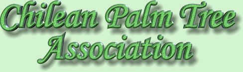 Chilean Palm Tree Association